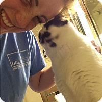 Adopt A Pet :: Chum - El Dorado Hills, CA