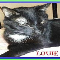 Adopt A Pet :: LOUIE - Fort Walton Beach, FL