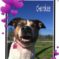 Adopt A Pet :: Cherokee - Chattanooga, TN