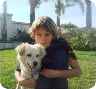 American Eskimo Dog/Spaniel (Unknown Type) Mix Dog for adoption in El Cajon, California - sunshine