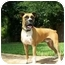 Photo 2 - Boxer Dog for adoption in Albany, Georgia - Murphy