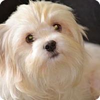 Adopt A Pet :: Daisy- I love dogs! - Redondo Beach, CA