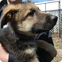 Adopt A Pet :: Hans - ADOPTED!! - Antioch, IL