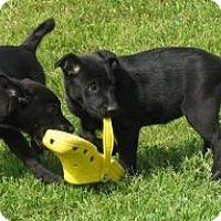 Adopt A Pet :: Hope - Hancock, MI