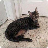 Adopt A Pet :: Rio - Lantana, FL