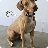 Adopt A Pet :: Leo - Calgary, AB