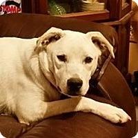Adopt A Pet :: Angel - kennebunkport, ME