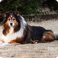 Adopt A Pet :: Precious - Knoxville, TN