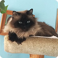 Adopt A Pet :: Pookie - N. Billerica, MA