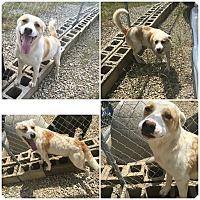 Adopt A Pet :: Petey - Midway, AR