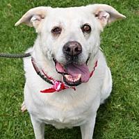 Adopt A Pet :: Clarabelle - San Diego, CA