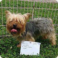Adopt A Pet :: Precious - Crump, TN