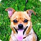 Adopt A Pet :: Dale