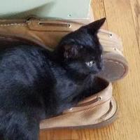Adopt A Pet :: Kalamata - West Allis, WI