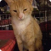Adopt A Pet :: Sunkist - Berkeley Hts, NJ