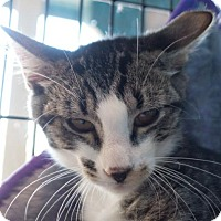 Adopt A Pet :: Korby - Redwood City, CA