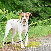 Adopt A Pet :: ROCCO - Monroe, GA