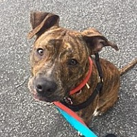 Adopt A Pet :: Aries - Kittery, ME