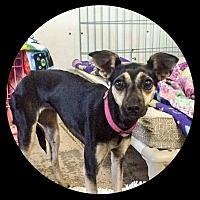 Adopt A Pet :: Lucy - New Richmond,, WI