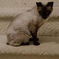 Adopt A Pet :: Alexis - NC - Liberty, NC