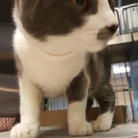 Adopt A Pet :: Jingles - Mesquite, TX