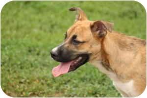 German Shepherd Dog Mix Puppy for adoption in Stillwater, Oklahoma - Jock
