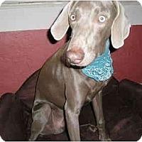 Adopt A Pet :: Ronin  **ADOPTED** - Eustis, FL
