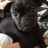 Adopt A Pet :: Henry-adoption  pending - Warwick, NY