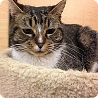 Adopt A Pet :: Kensy - Monroe, GA