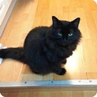 Adopt A Pet :: Nico - Vancouver, BC