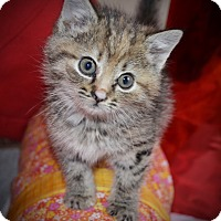 Adopt A Pet :: Holly - Xenia, OH