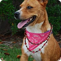 Adopt A Pet :: Angel - Sugar Land, TX