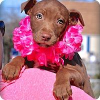 Adopt A Pet :: Betty - Reisterstown, MD