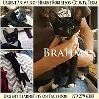 Adopt A Pet :: Brahms - Hearne, TX