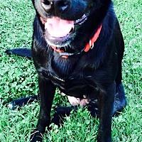 Adopt A Pet :: Lick - Destrehan, LA