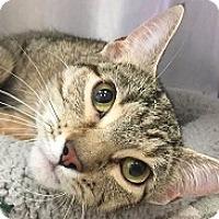 Adopt A Pet :: Queen - Springdale, AR