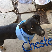 Adopt A Pet :: Chester - Byhalia, MS