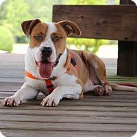 Adopt A Pet :: Oliver - Pinehurst, NC