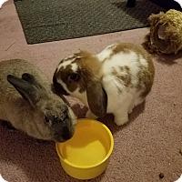 Adopt A Pet :: Bellsprout and Momo - Conshohocken, PA