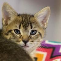 Adopt A Pet :: Rocket - LaBelle, FL