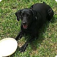 Adopt A Pet :: Magick - New Smyrna Beach, FL