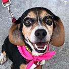 Adopt A Pet :: Maggie *Adopt*