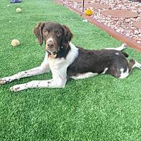 Adopt A Pet :: CO/Dakota - Walton, KY