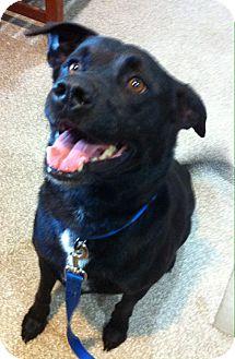 Labrador Retriever Mix Dog for adoption in Nashville, Tennessee - Sanford