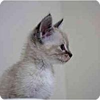 Adopt A Pet :: Luna - Little Rock, AR