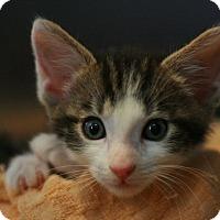 Adopt A Pet :: Jake - Canoga Park, CA