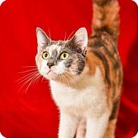 Adopt A Pet :: Showa - Athens, GA