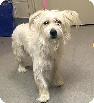 Terrier (Unknown Type, Medium) Mix Dog for adoption in Parma, Ohio - Truffle
