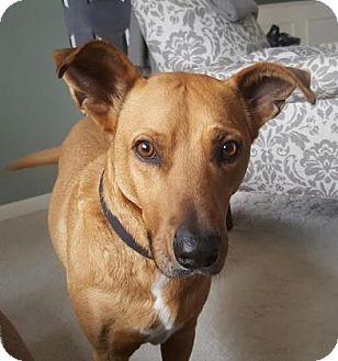 Retriever (Unknown Type) Mix Dog for adoption in Warsaw, Indiana - Radisson