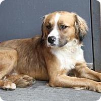 Adopt A Pet :: Dodger - ADOPTED - Livonia, MI